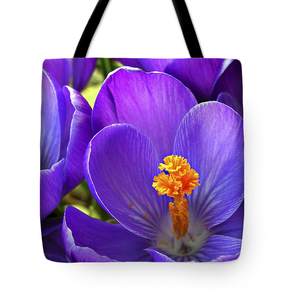 Flower Tote Bag featuring the photograph First Crocus by Marilyn Hunt