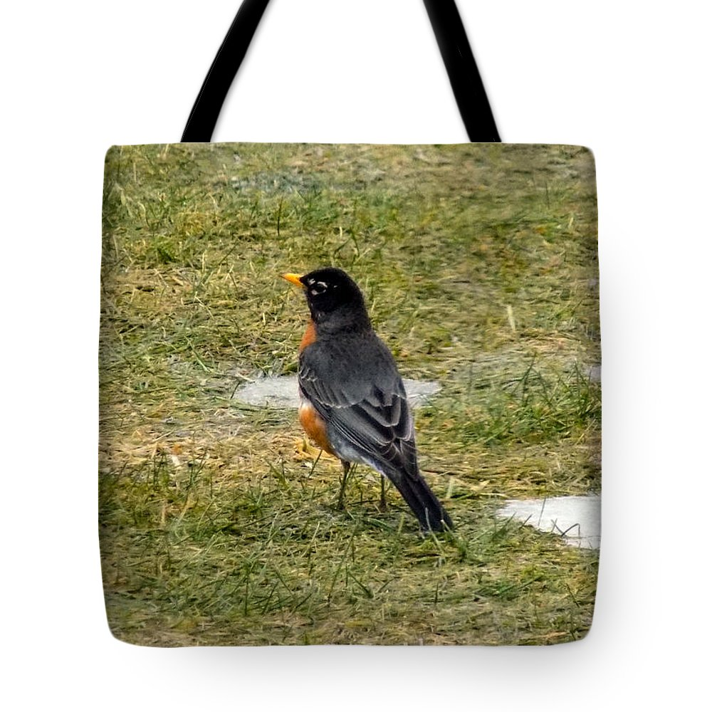 Robin Tote Bag featuring the photograph First Robin Of Spring by William Tasker