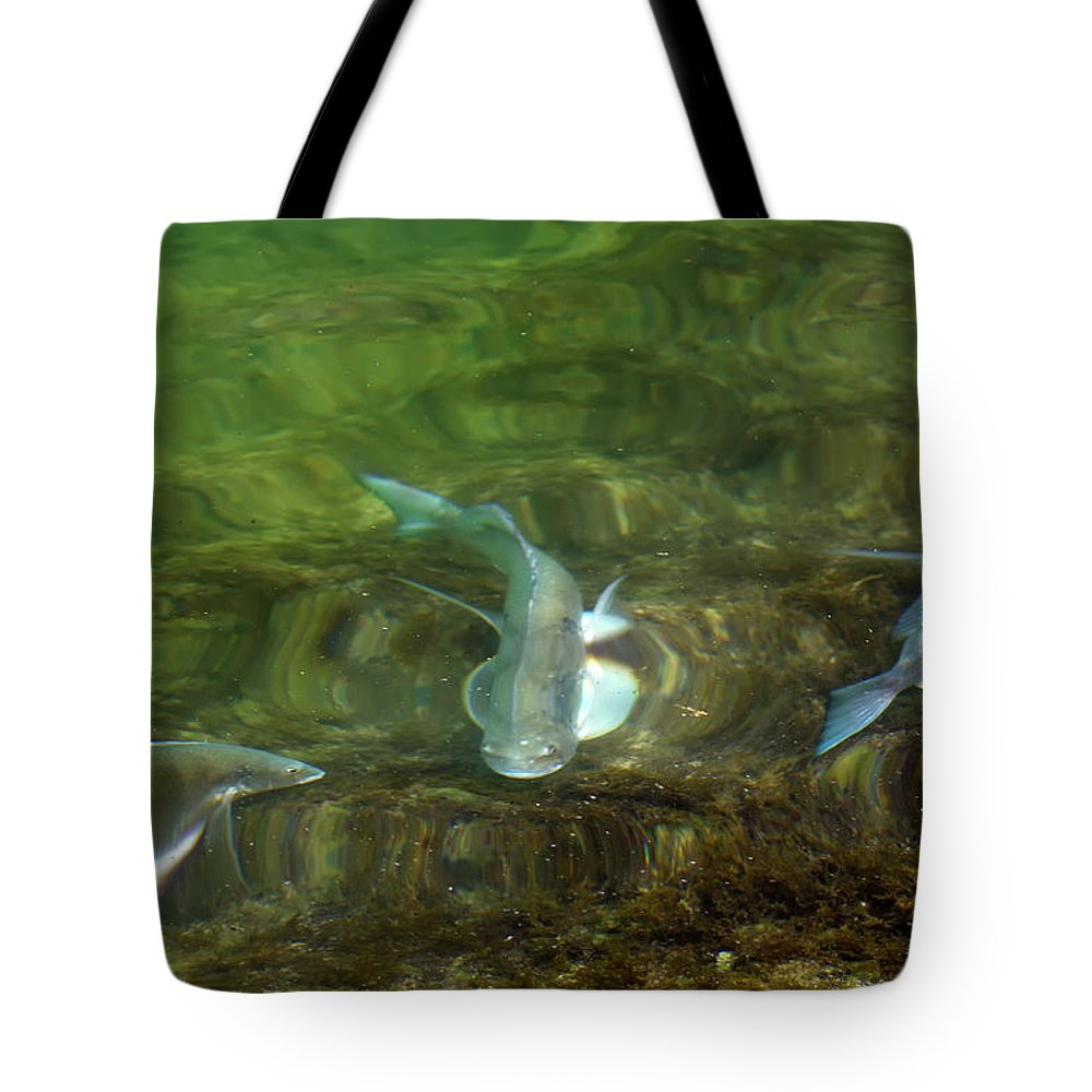 Fish Tote Bag featuring the photograph Fish Refractions by Paul Cowan