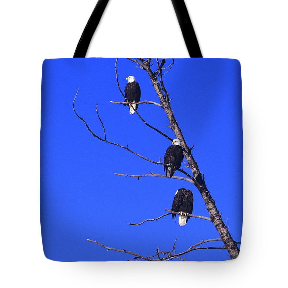 Alaska Tote Bag featuring the photograph Five Bald Eagles by John Hyde - Printscapes