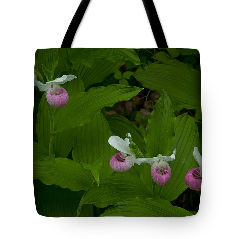 Wildflowers Tote Bag featuring the photograph Five Slippers by Irwin Barrett