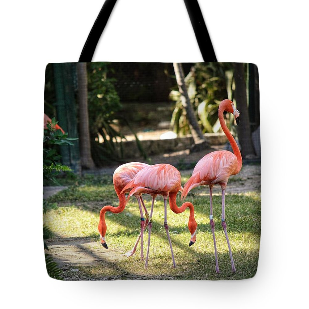 Flamingo Tote Bag featuring the photograph Flamago Twins by Joseph Caban