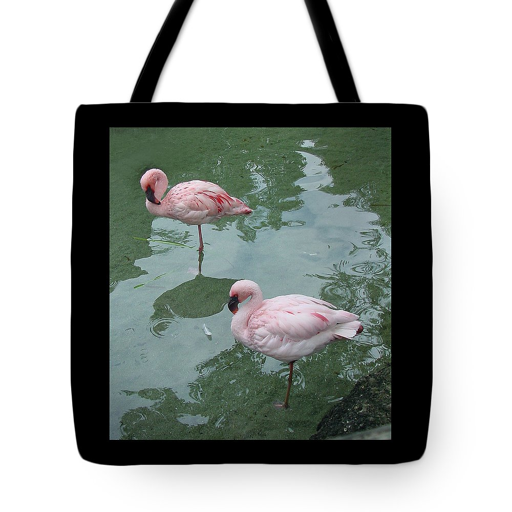 Wildlife Tote Bag featuring the photograph Flamingoes Posing by Shirley Heyn