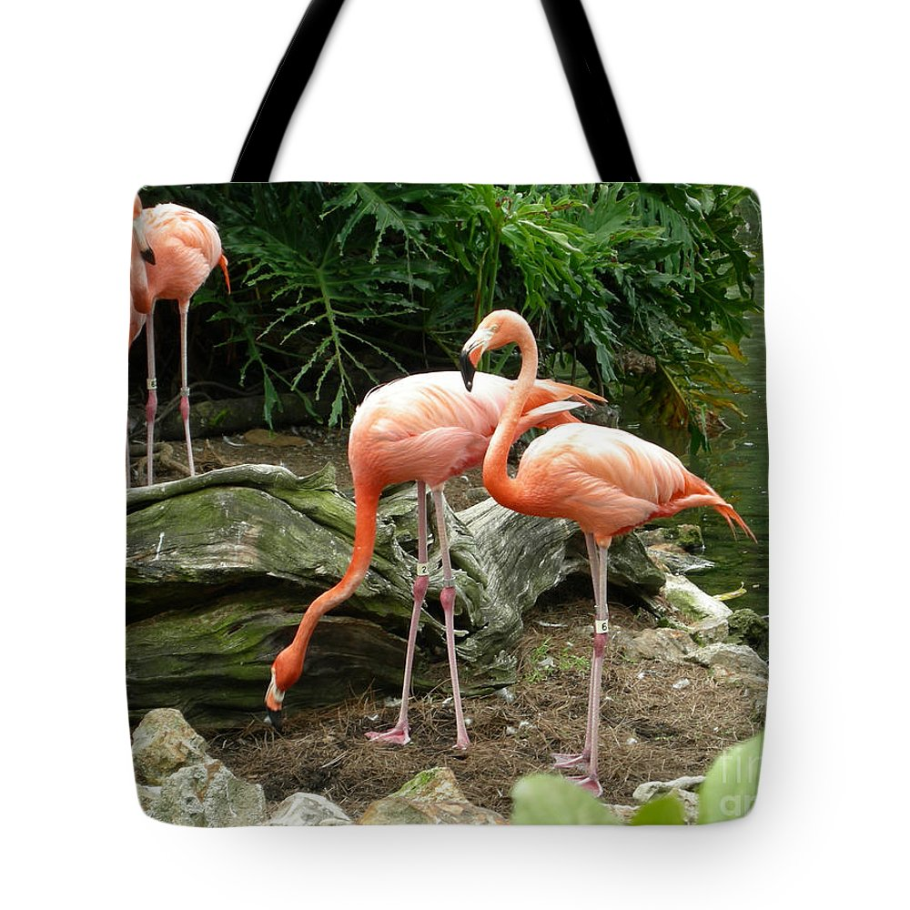Flamingo Tote Bag featuring the photograph Flamingos by Carol Turner