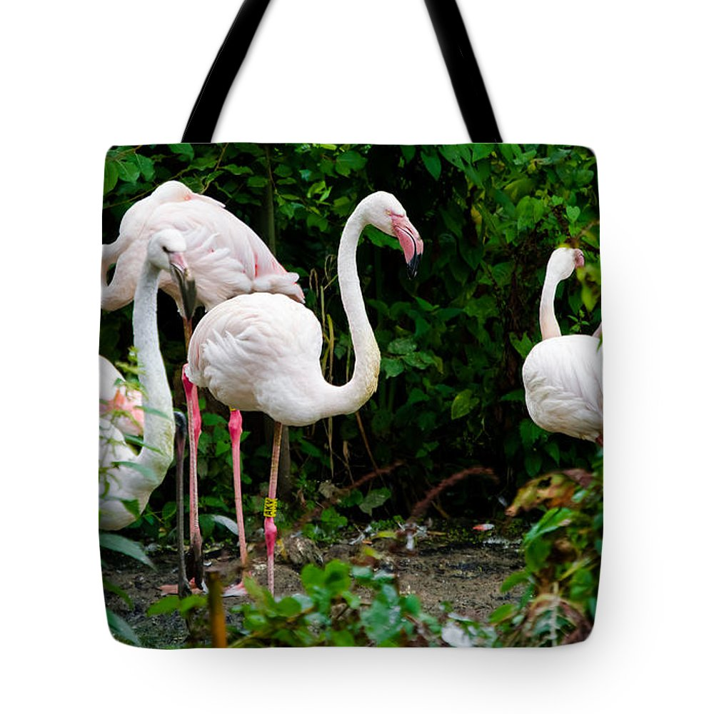 Flamingo Tote Bag featuring the photograph Flamingos by F Helm