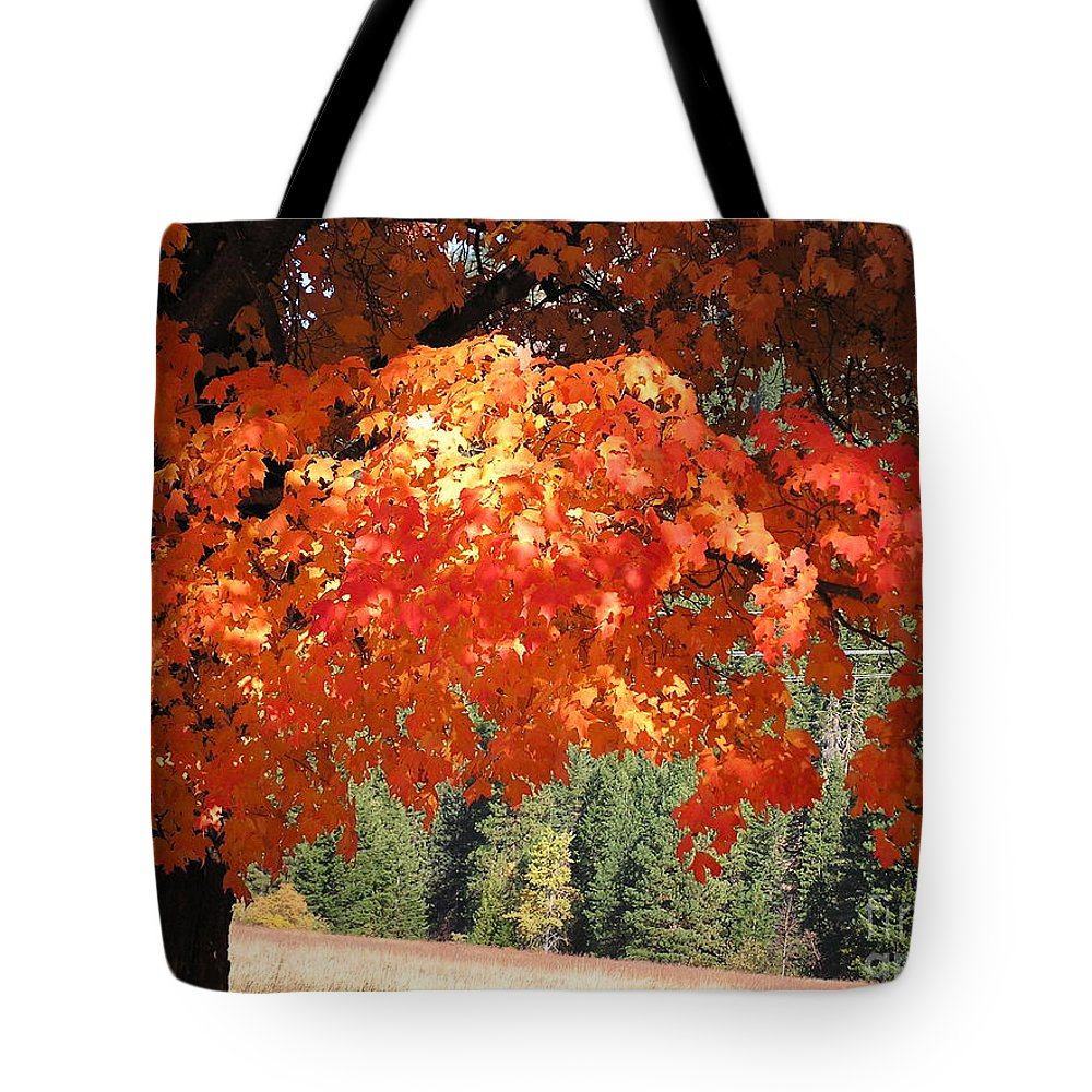 Autumn Photographs Tote Bag featuring the photograph Flickering Sunlight by Louise Magno