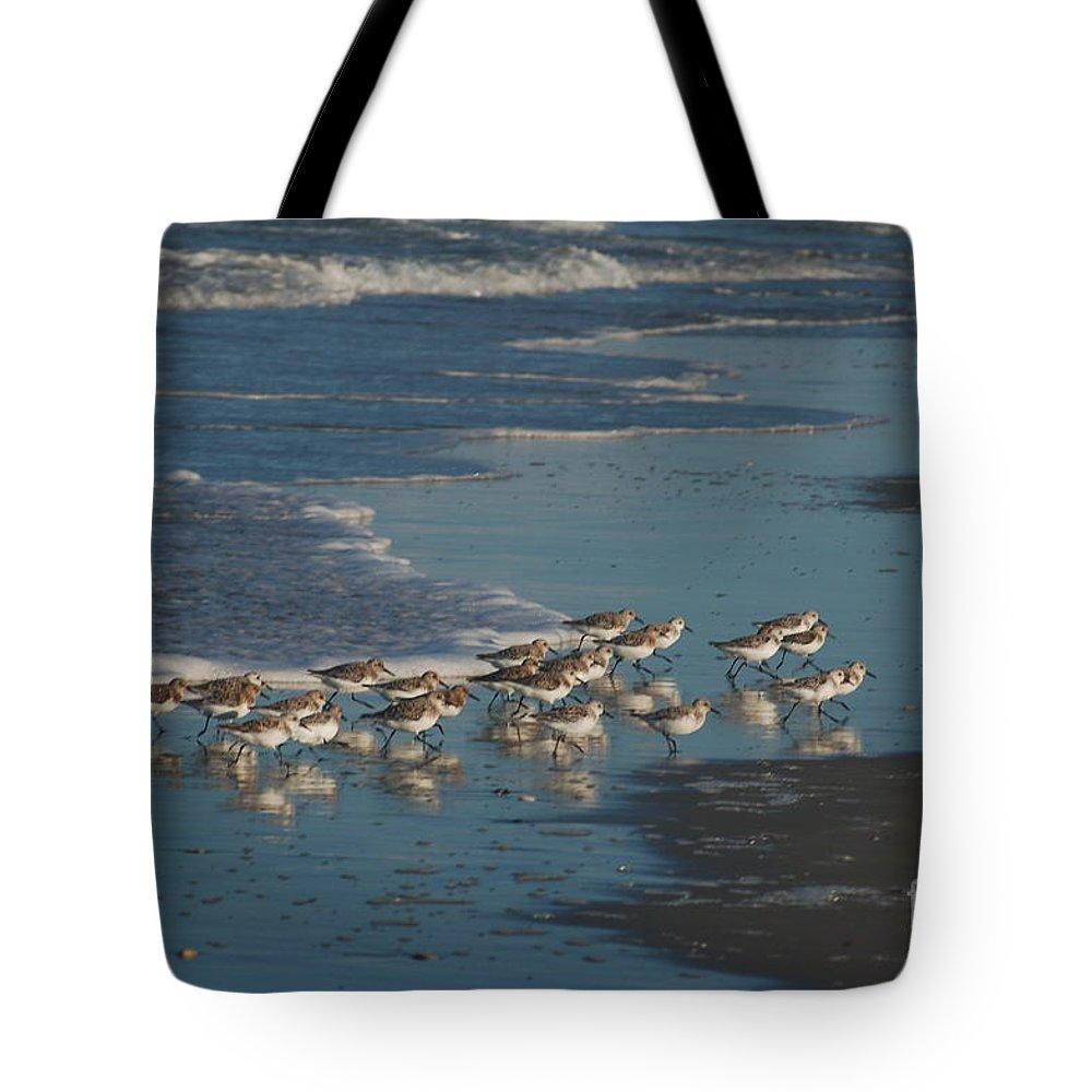 Sanderlings Tote Bag featuring the photograph Flock Of Sanderlings by Don Wilhour