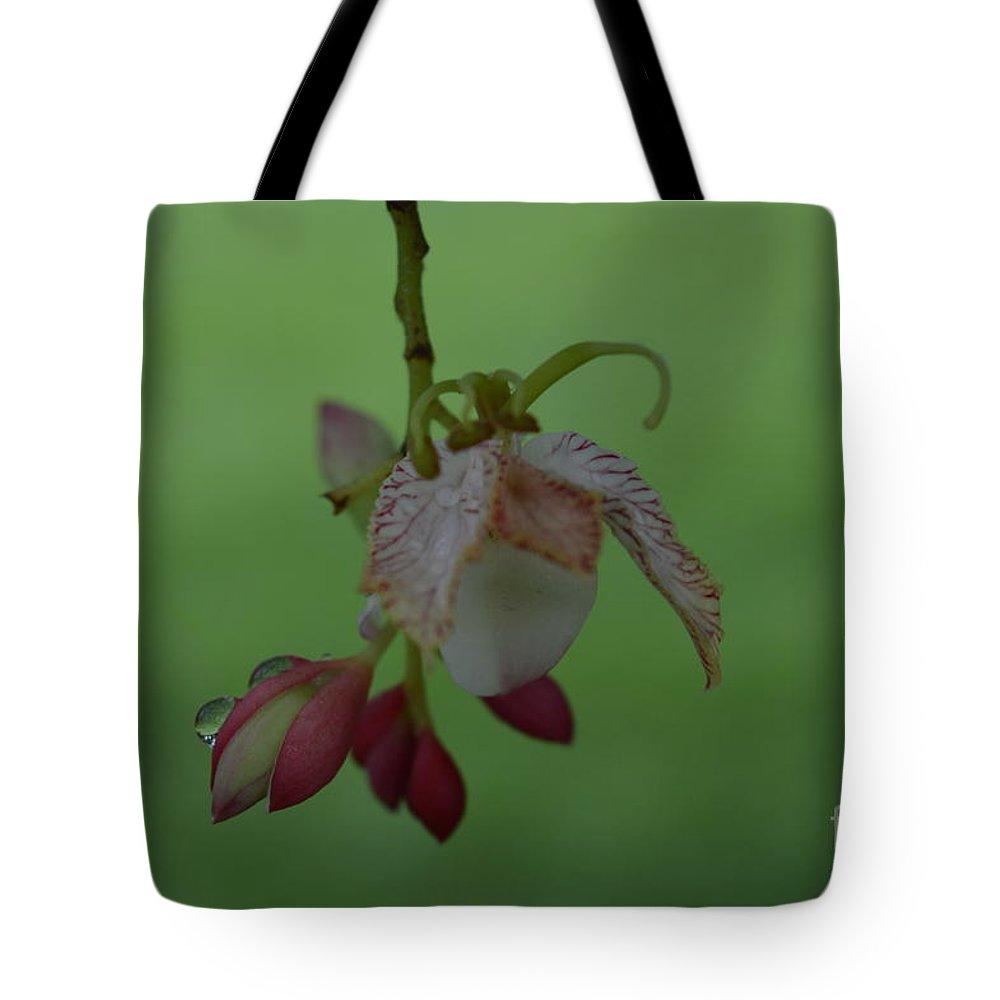 Naturaleza Tote Bag featuring the photograph Flor De Tamarindo by Lenin Caraballo