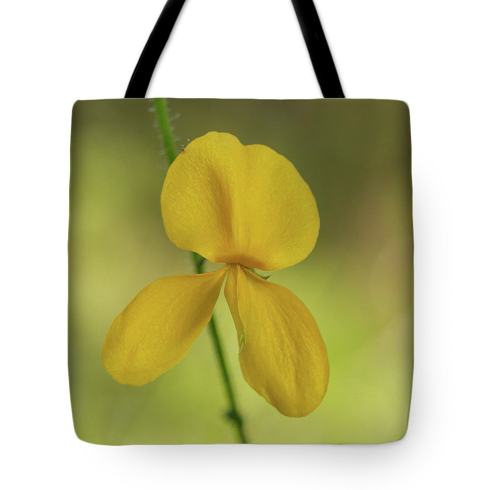 Alicia Tote Bag featuring the photograph Florida Alicia 2 by Paul Rebmann