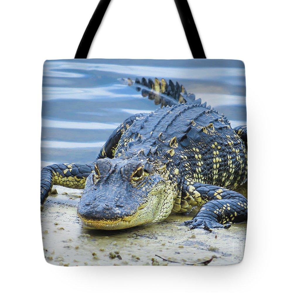 Alligators Tote Bag featuring the photograph Florida Alligator Closeup by Zina Stromberg