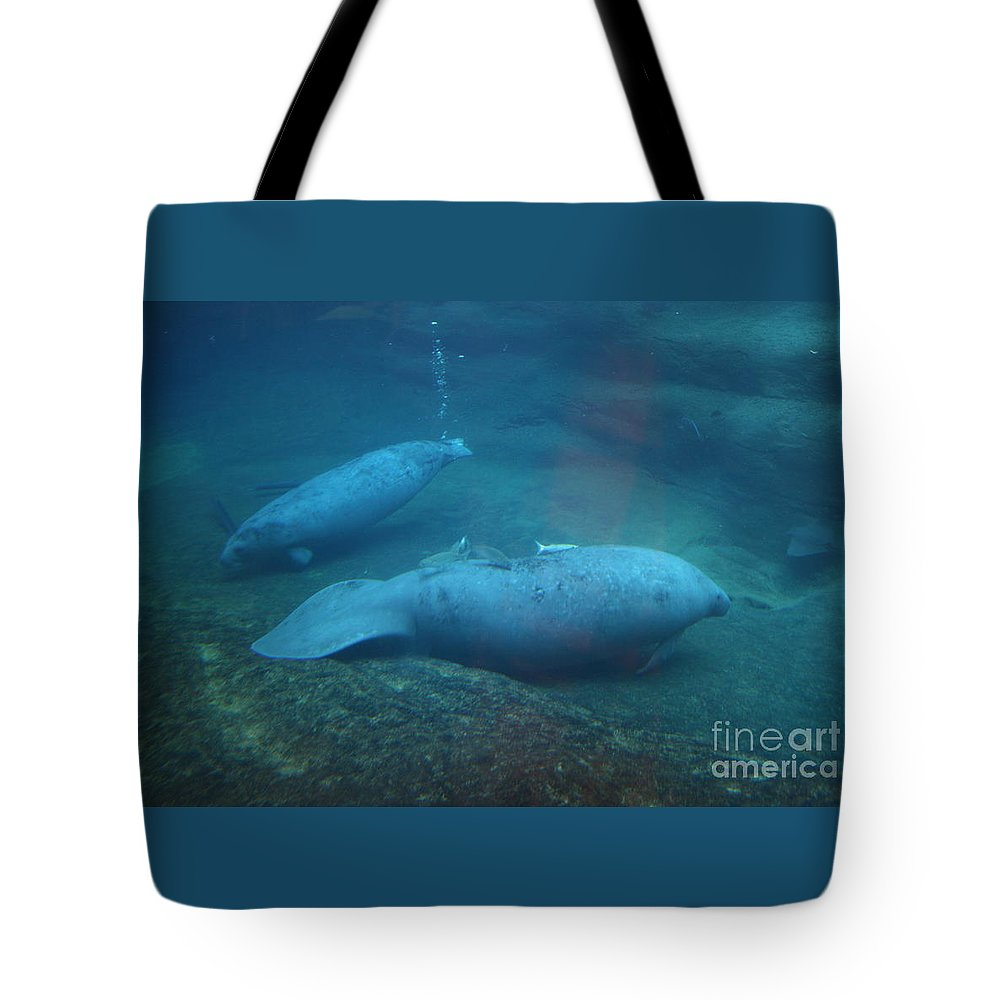 Underwater Tote Bag featuring the photograph Florida Manatees by Dawn Downour