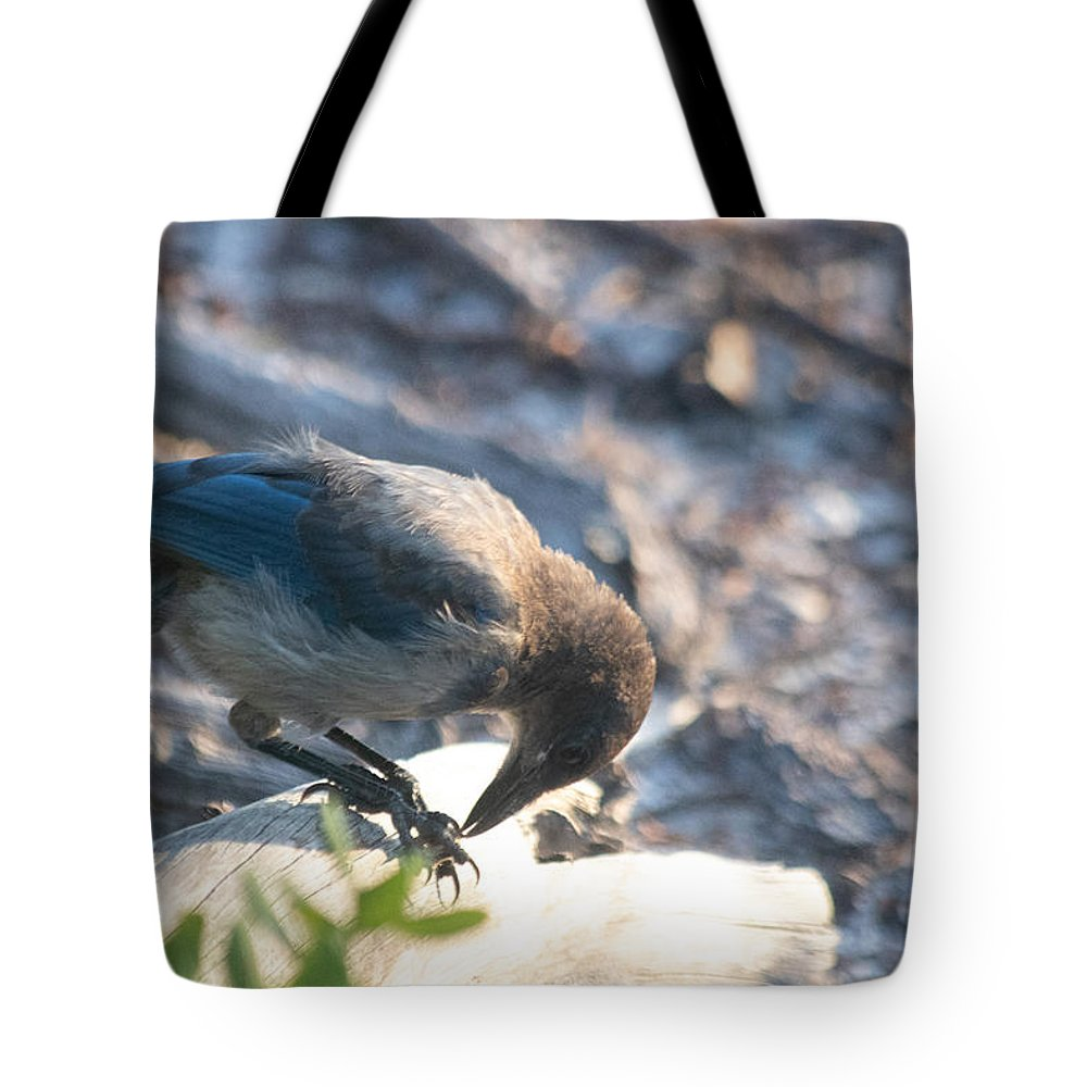 Florida Scrub Jay Tote Bag featuring the photograph Florida Scrub Jay Breakfast Time by JR Cox