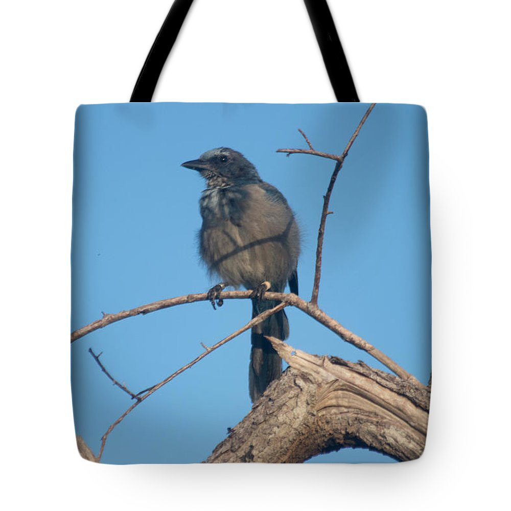 Scrub Jay Tote Bag featuring the photograph Florida Scrub Jay Watching The Lay Of The Scrub by JR Cox