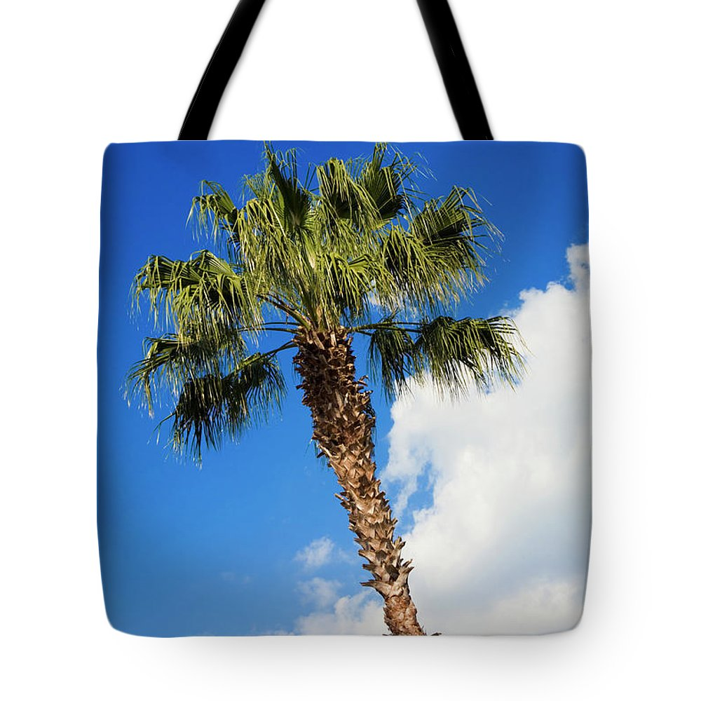 Florida State Tree Tote Bag featuring the photograph Florida State Tree by Diane Macdonald