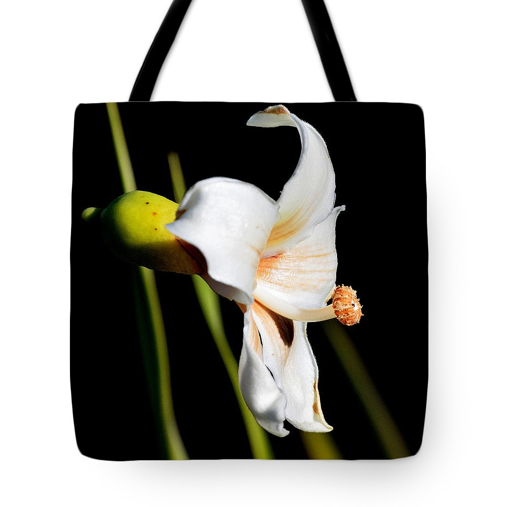 Floss Silk Bloom Tote Bag featuring the photograph Floss Silk Bloom by Michael Searcy