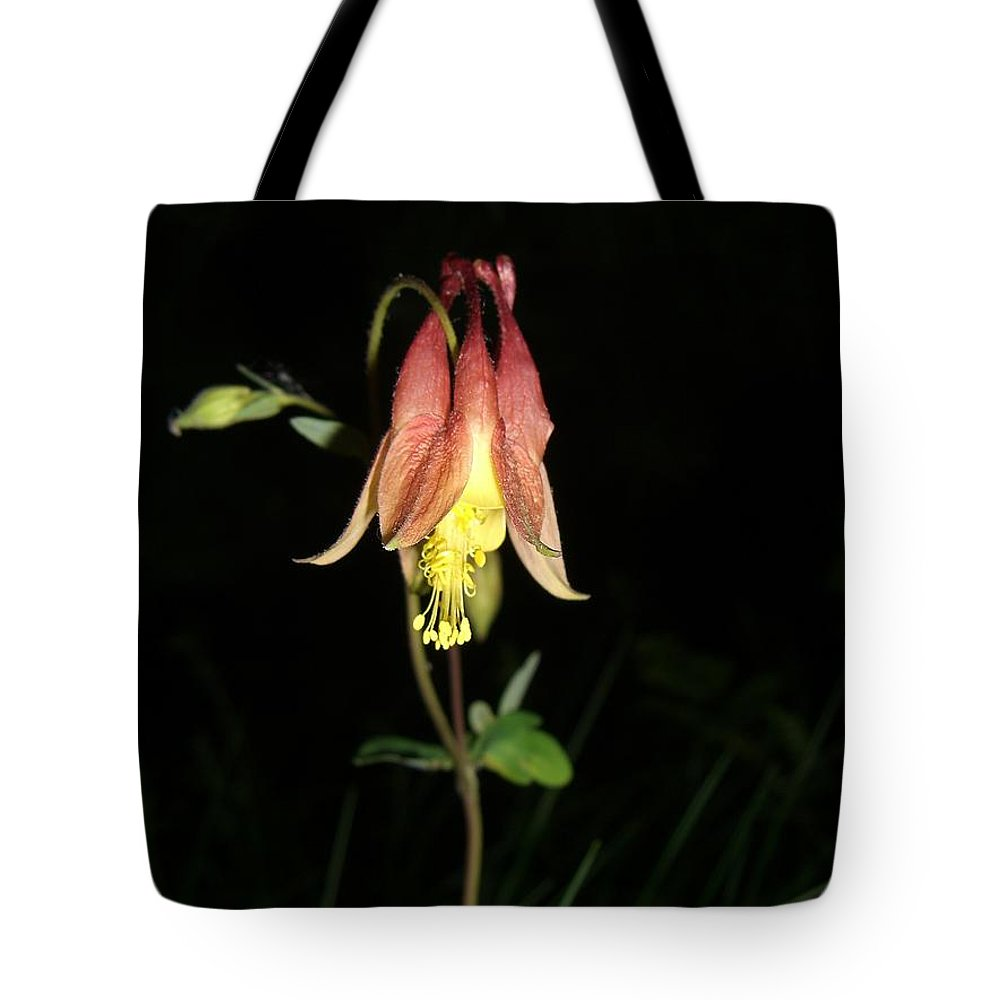 Flower Tote Bag featuring the photograph Flower by Amanda Kabat
