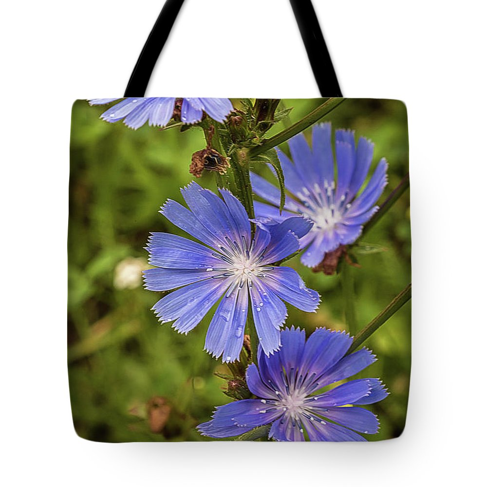 Flower Tote Bag featuring the photograph Flower Chicory by Alex Konakov