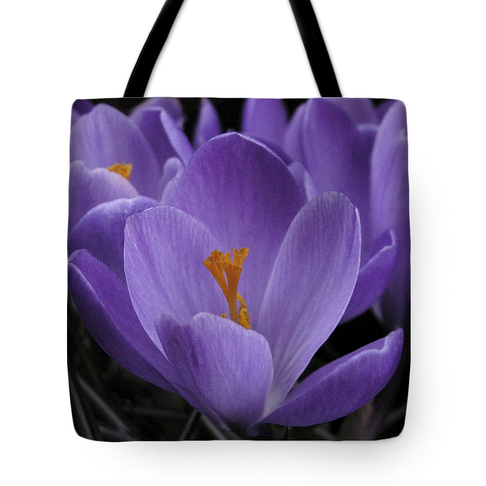 Flowers Tote Bag featuring the photograph Flower Crocus by Nancy Griswold
