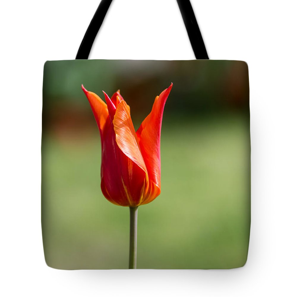 Flower Tote Bag featuring the photograph Flower by Kapil Pal