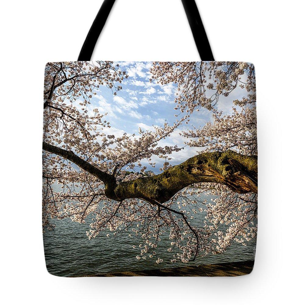 Japanese Flowering Cherry Tree Tote Bag featuring the photograph Flowering Cherry Tree by Thomas R Fletcher