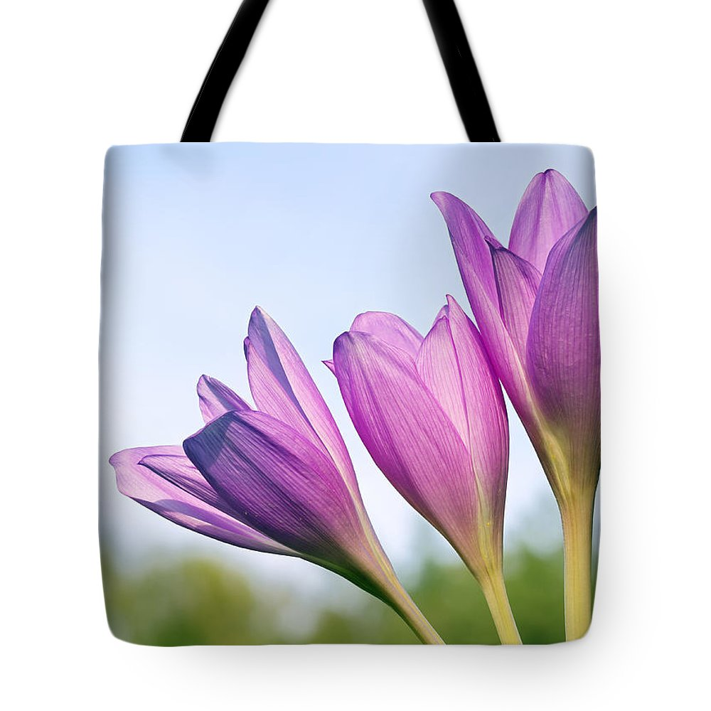 Flowers Tote Bag featuring the photograph Flowers Crocuses by Galina Savina