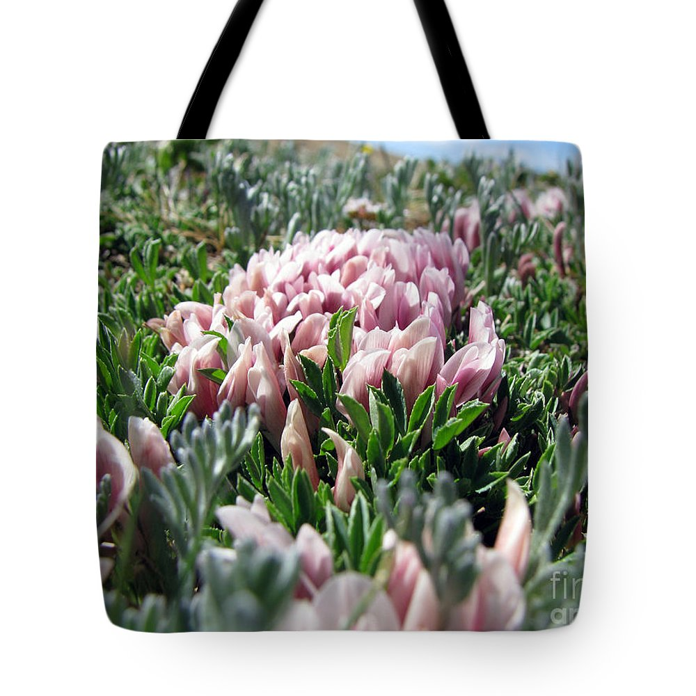 Flowers Tote Bag featuring the photograph Flowers In The Alpine Tundra by Amanda Barcon