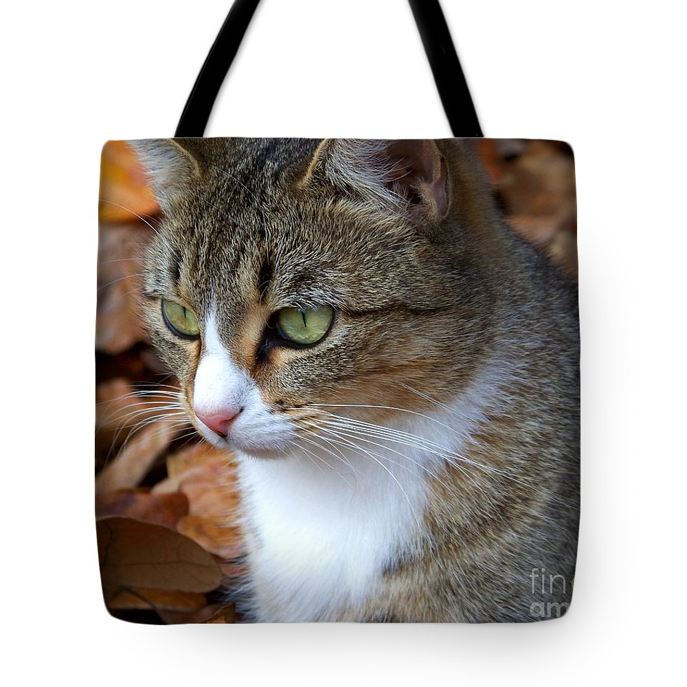 Cat Tote Bag featuring the photograph Focused by Jai Johnson