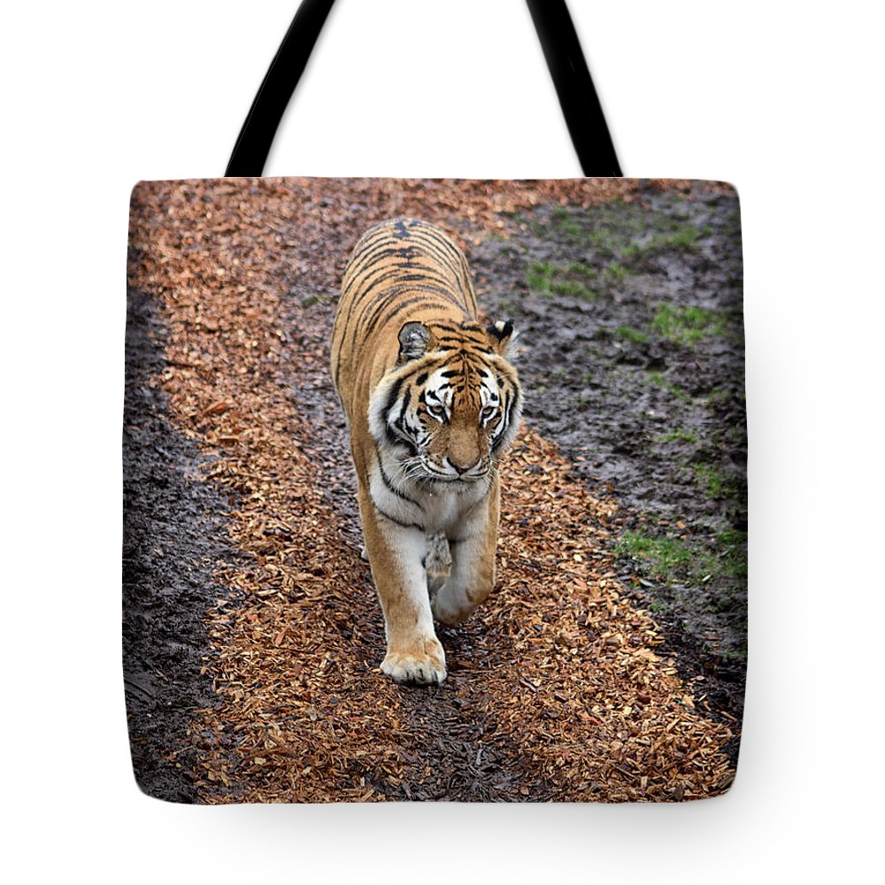 Tiger Tote Bag featuring the photograph Follow Your Path In Life by Martin Newman