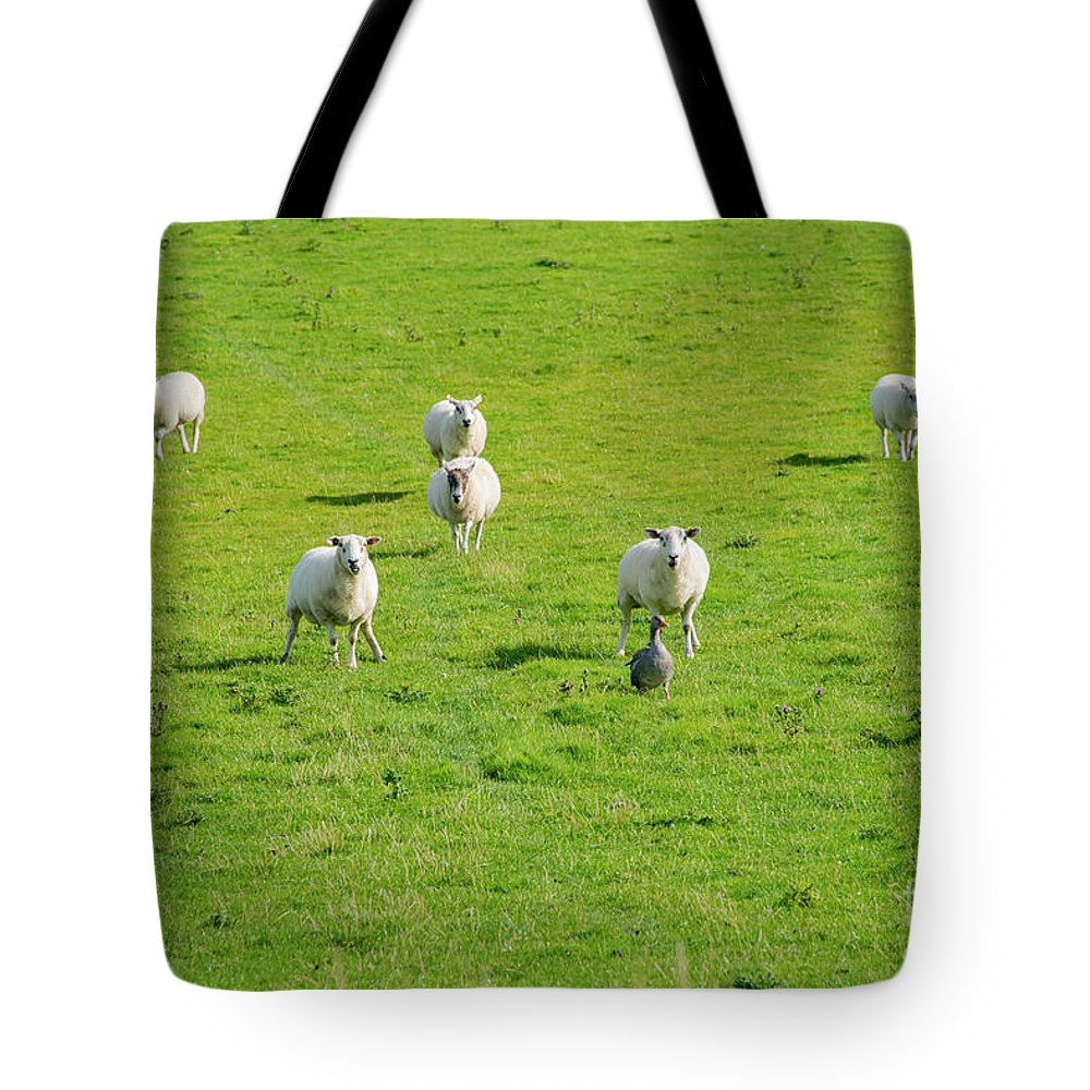 Isle Of Iona Tote Bag featuring the photograph Following The Leader by Bob Phillips