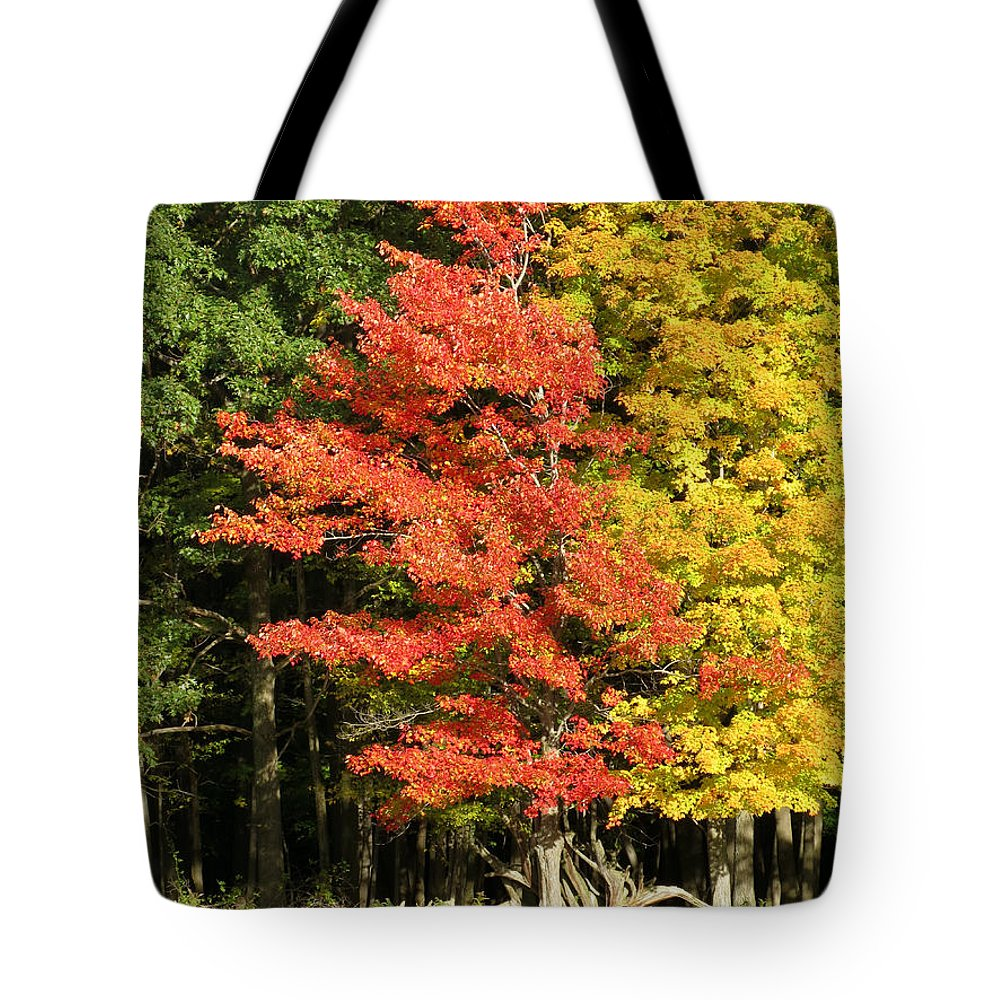 Trees Tote Bag featuring the photograph Forest Door by Azthet Photography