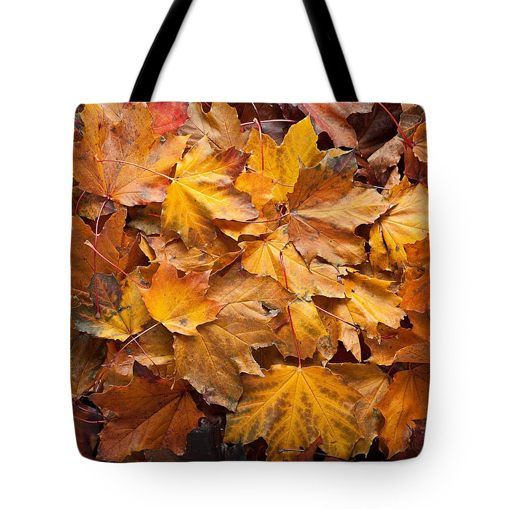 Maple Tote Bag featuring the photograph Forest Floor by Steve Gadomski