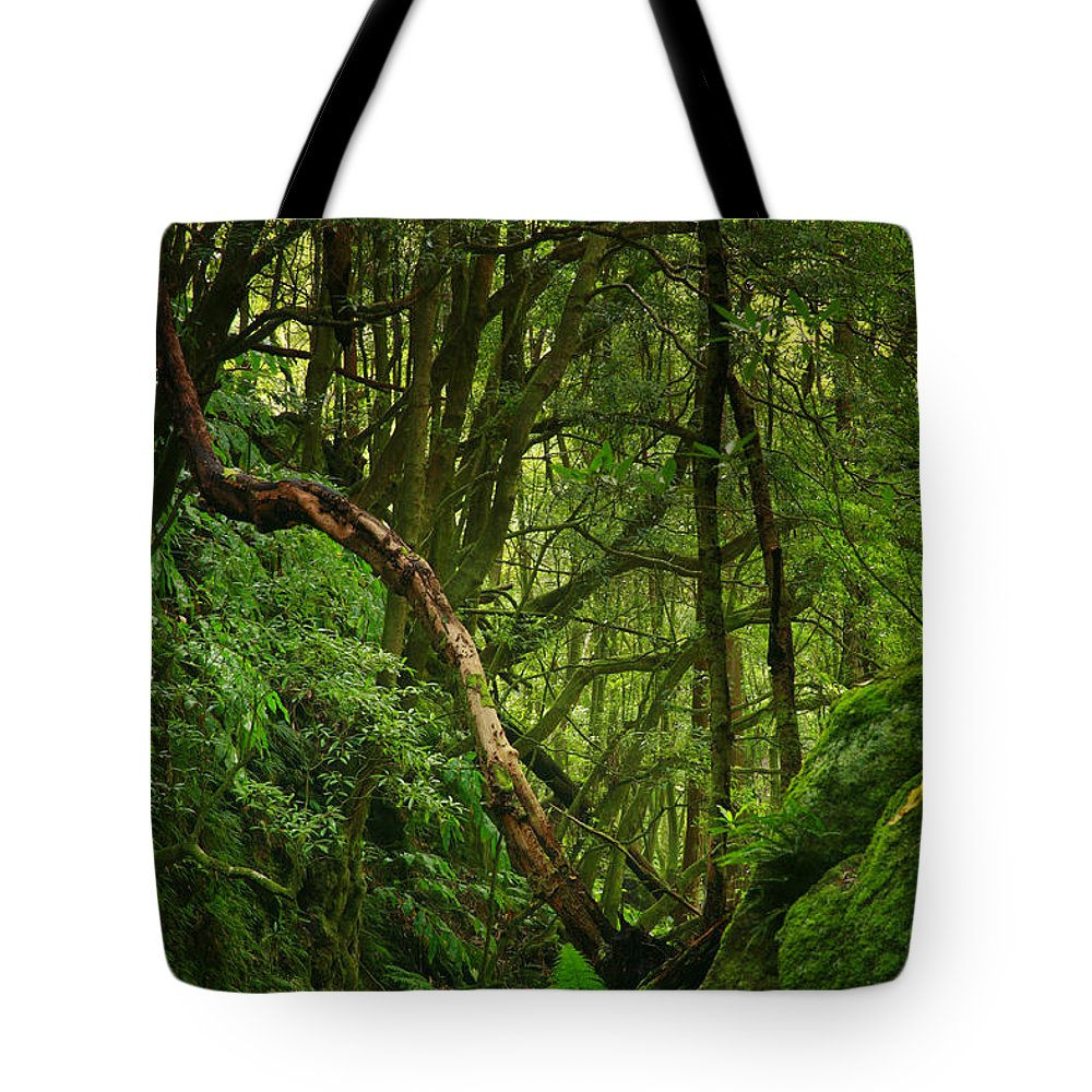 Woodland Tote Bag featuring the photograph Forest by Gaspar Avila