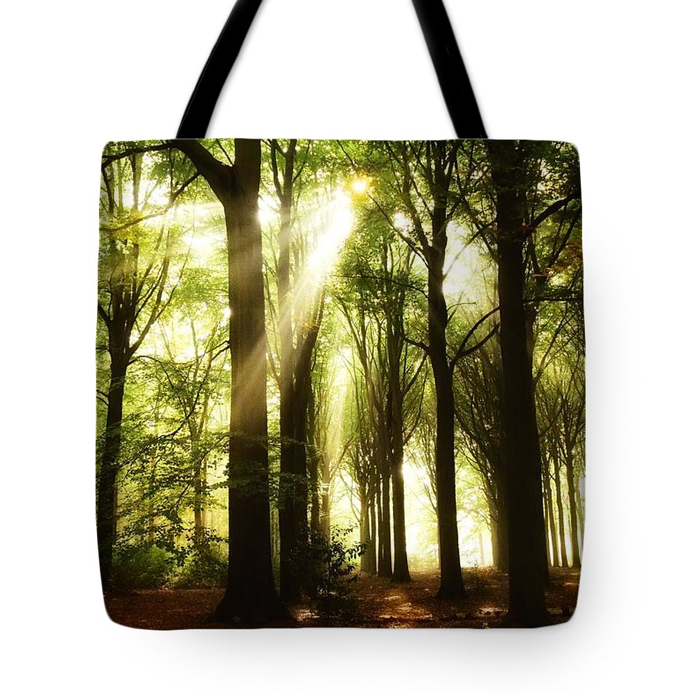 Autumn Tote Bag featuring the photograph Forest Rays by Andrea Otte