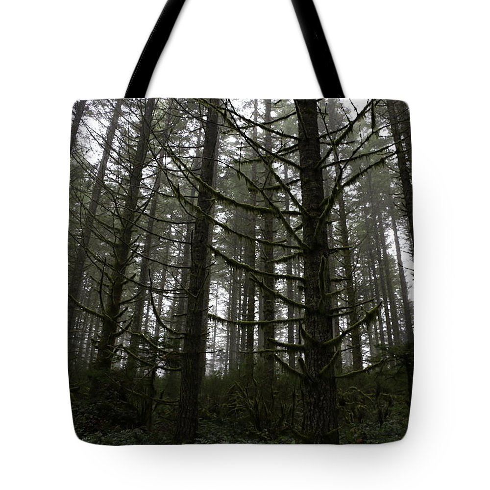 Trees Tote Bag featuring the photograph Forest Through The Trees by Dani Keating