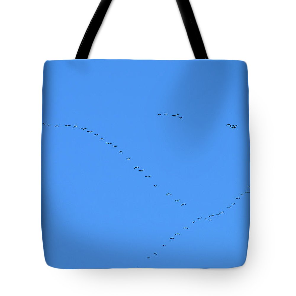 Bird Tote Bag featuring the photograph Forming Up by Rich Bodane
