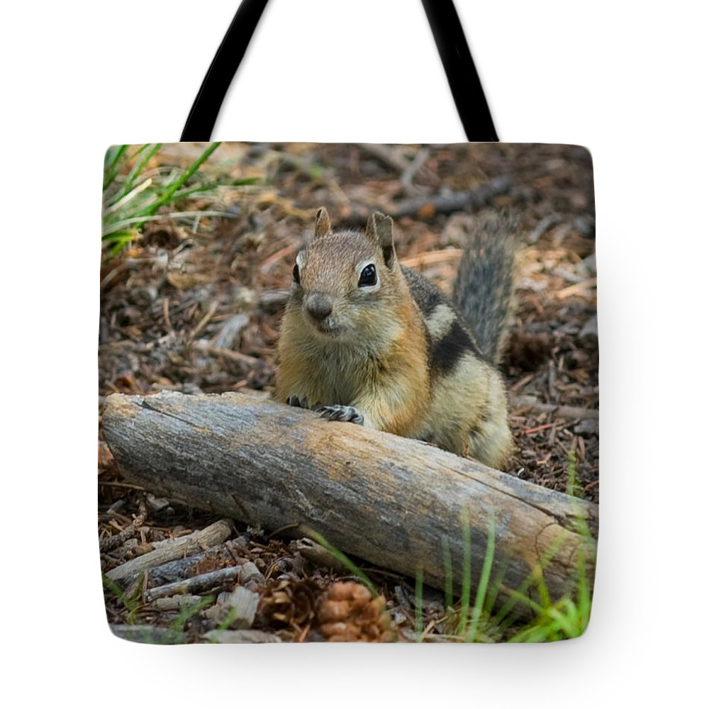 Golden Mantled Ground Squirrel Tote Bag featuring the photograph Forrester by Martha Moore