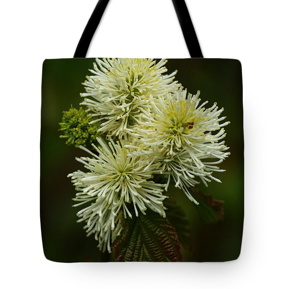 Fothergilla Major Tote Bag featuring the photograph Fothergilla Major - Mountain Witchalder by Christiane Schulze Art And Photography