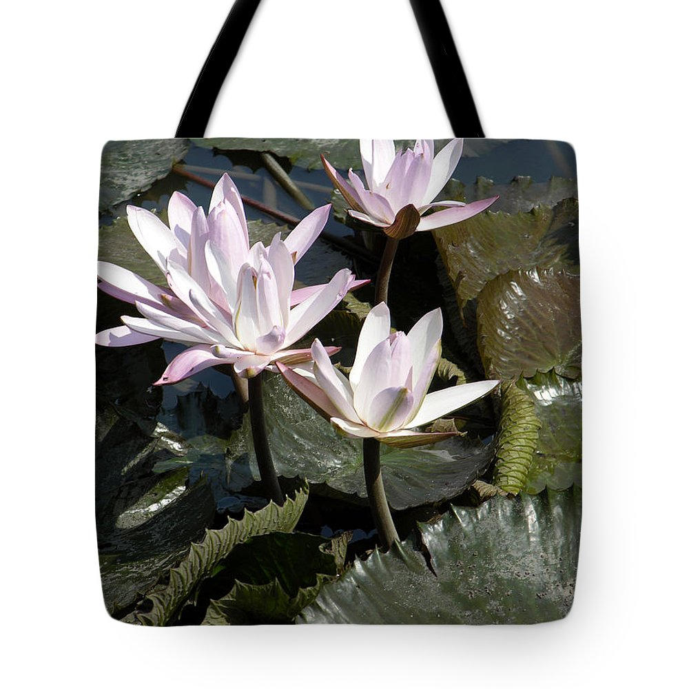 Water Lilies Tote Bag featuring the painting Four Lilies In The Sunlight by John Lautermilch