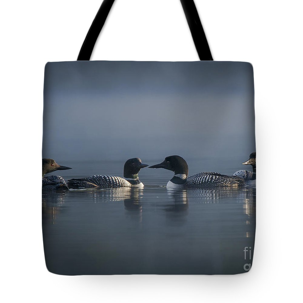 Loons Tote Bag featuring the photograph Four Loons Circling On Water by Julie DeRoche