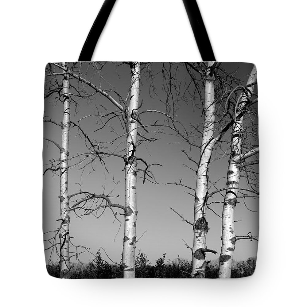 Birch Tote Bag featuring the photograph Four Naked Birches Bw by Mary Bedy