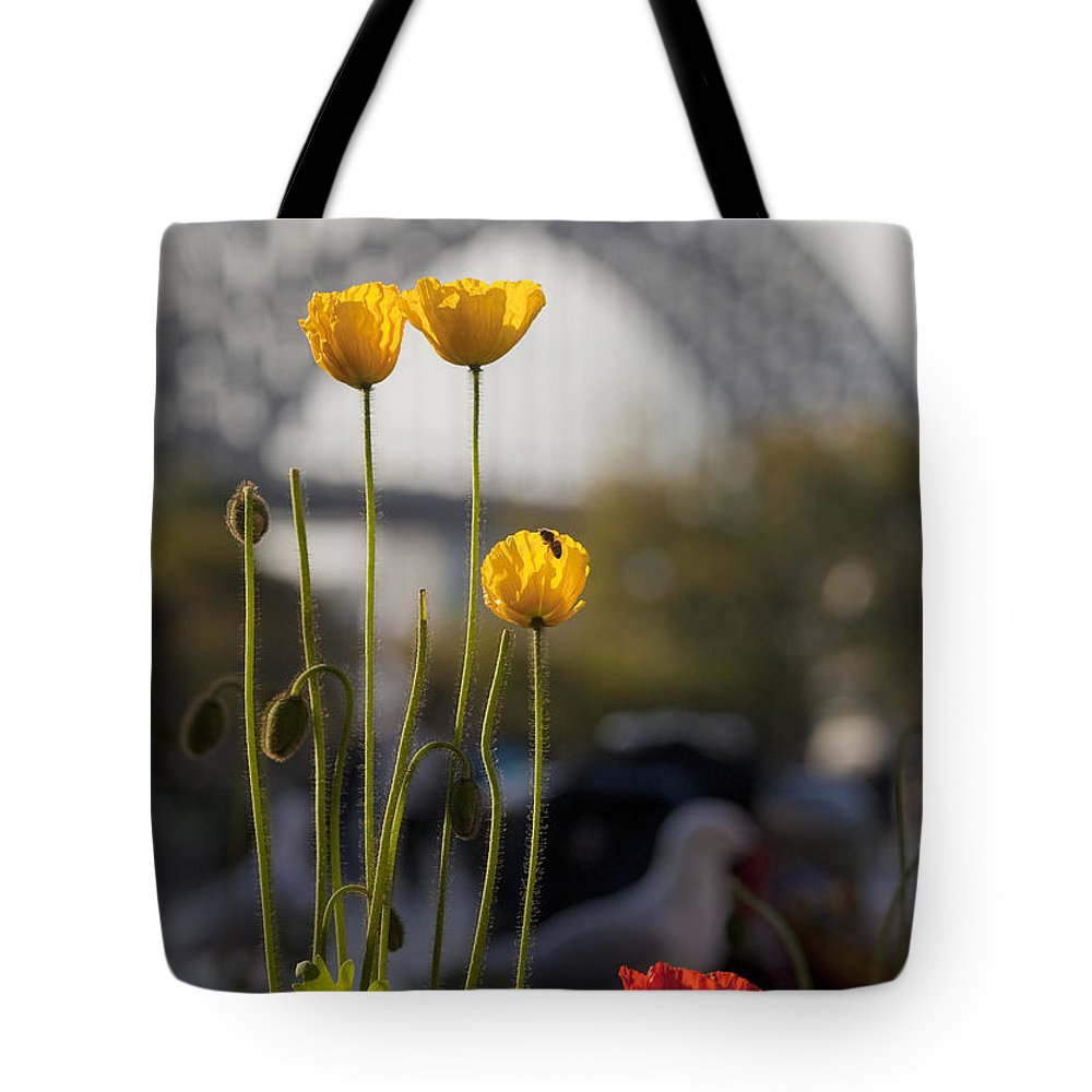 Yellow Poppies Tote Bag featuring the photograph Four Poppies With Harbour Bridge Backdrop by Sheila Smart Fine Art Photography