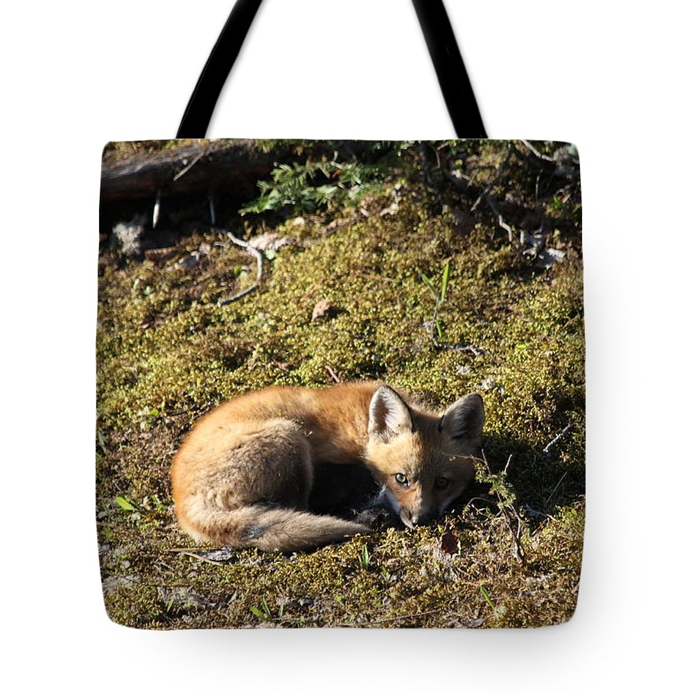 Fox Kit Tote Bag featuring the photograph Fox Kit by Joi Electa