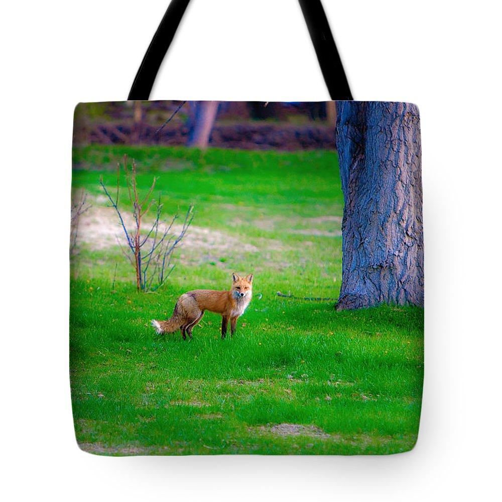 Fox Tote Bag featuring the photograph Fox Of Boulder County by James BO Insogna