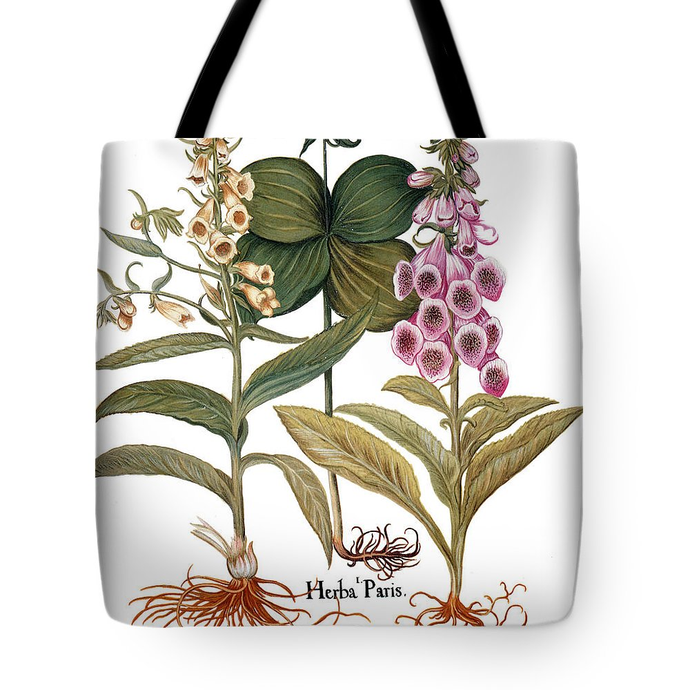 1613 Tote Bag featuring the photograph Foxglove And Herb Paris by Granger