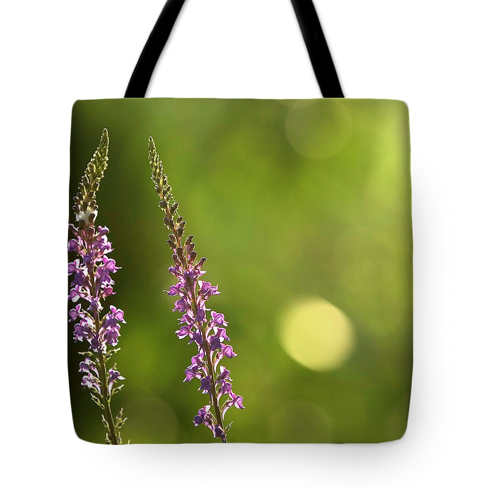 Digitalis Tote Bag featuring the photograph Foxgloves In The Late Summer Sun by Jonathon Cuff