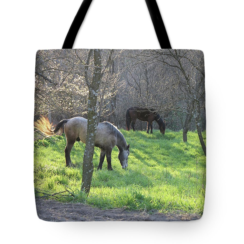 Animal Tote Bag featuring the photograph Freedom by Anna Marinova