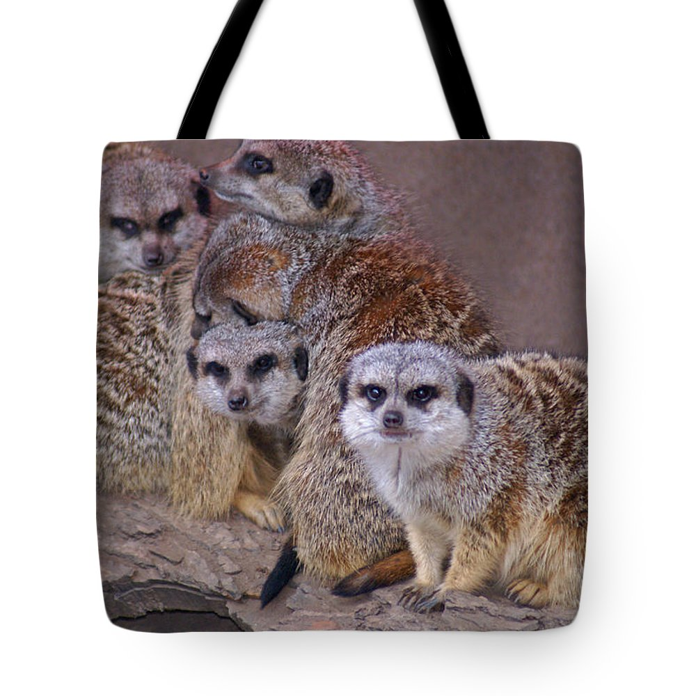 Mer Cats Tote Bag featuring the photograph Freezing Meer Cats by Heather Coen