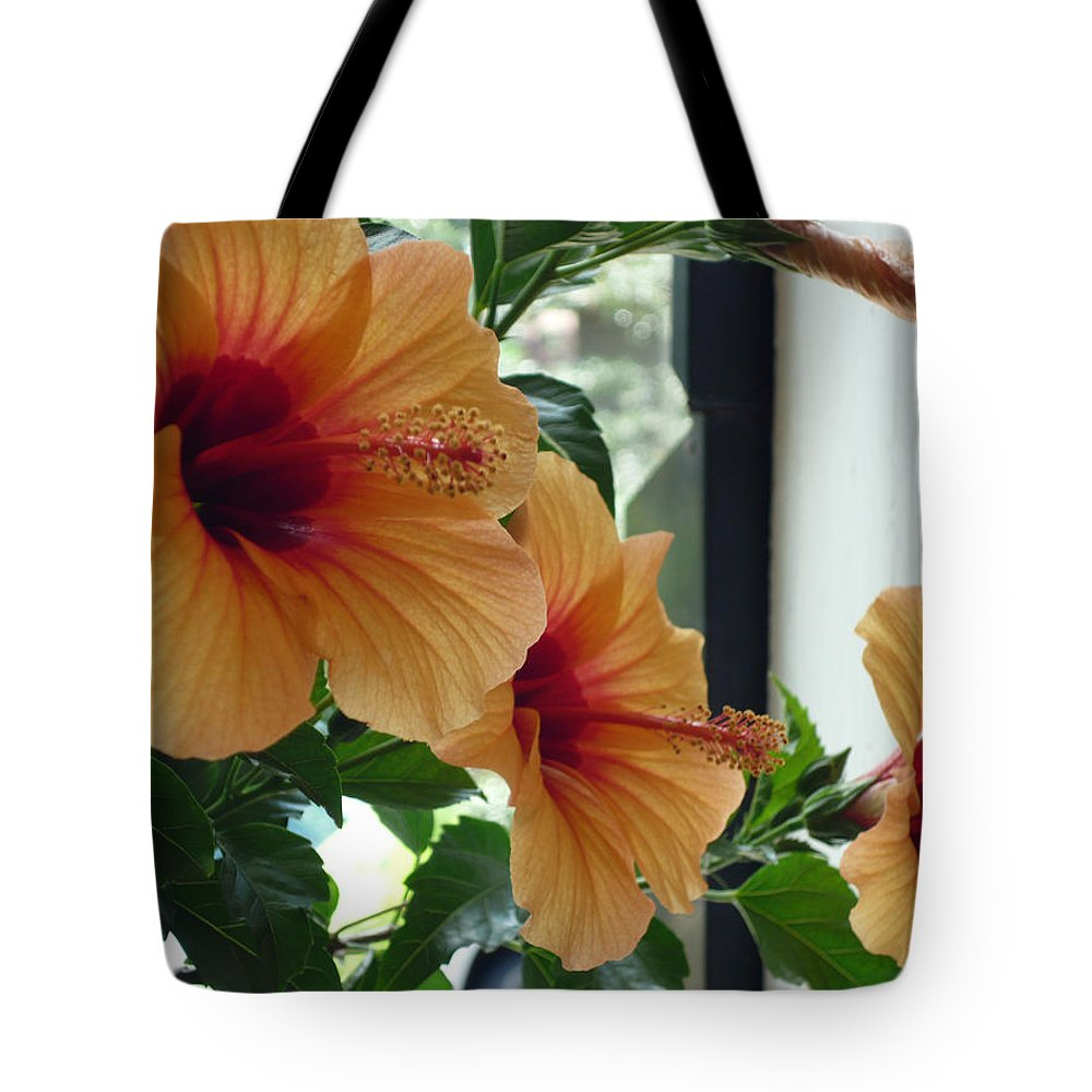Photography Flower Floral Bloom Hibiscus Peach Tote Bag featuring the photograph Friends For A Day by Karin Dawn Kelshall- Best
