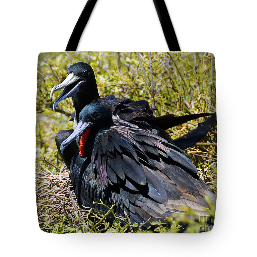 Magnificent Frigatebird Tote Bag featuring the photograph Frigatebirds In Love by Catherine Sherman