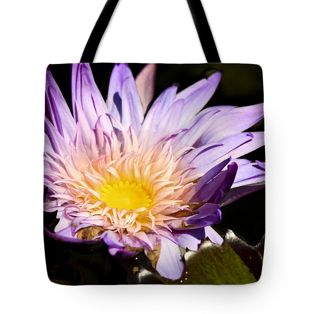 Purple Tote Bag featuring the photograph Frilly Lilly by Teresa Mucha